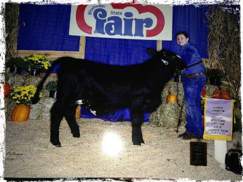 BCF Beefmaster heifer show