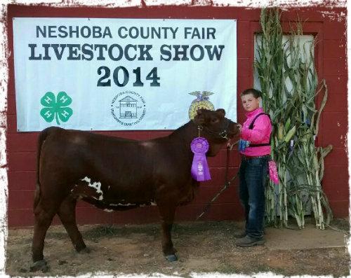 BCF beefmaster heifer show 2